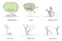 """El papel de un árbol en el aspecto social, reproducido en los """"árboles"""" artificiales"""